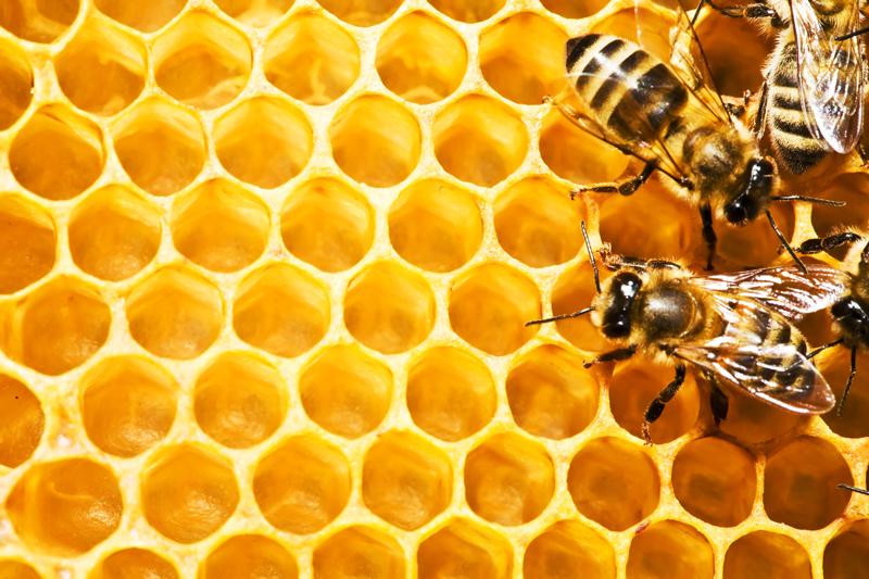 Bienenwabe1